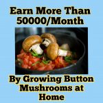 Earn More Than 50000/Month by Growing Button Mushrooms at Home